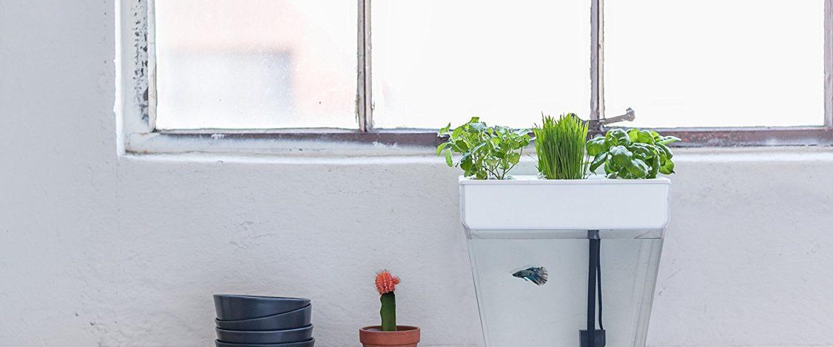 Best Desktop Home Aquaponic Water Garden